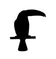 black toucan silhouette vector image vector image