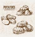 digital detailed line art potato vector image vector image