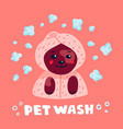 pet grooming concept happy lap-dog in a towel and vector image
