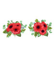 set a bouquet of red gerberas eucalyptus and wax vector image