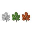 chestnut leaf spring green and autumn orange vector image