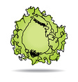 Freehand drawing iceberg lettuce icon vector image vector image