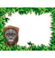 monkey in leaf frame vector image