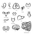 Organs of Human vector image