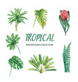 Element watercolor design with tropical plant on