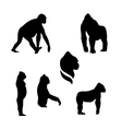 Gorilla monkey silhouettes vector image vector image