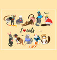 pattern with cute 21 cats cats breeds vector image