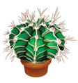 Realistic cactus vector image vector image