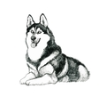 Sketched husky dog hand drawn vector image vector image