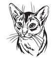 decorative portrait of abyssinian cat vector image vector image