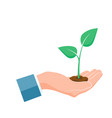 plant grown in hand green sprout grow up in palm vector image vector image
