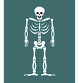 Skeleton on white background Skull and Bones Dead vector image vector image