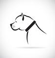 images of Pitbull dog