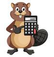beaver holding calculator on white background vector image