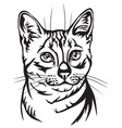 decorative portrait of egyptian mau cat vector image