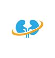 kidney vector image vector image