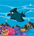 manta ray swims in the ocean vector image
