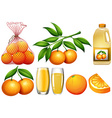 Oranges and orange products vector image vector image