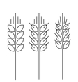 Wheat spike icons set isolated outline vector image