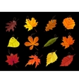 Autumn leaves tags isolated on black background vector image vector image