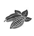 cocoa bean glyph icon vector image