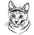 decorative portrait of russian blue cat vector image