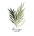hand drawn double palm leaves tropical dark green vector image