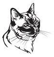 decorative portrait of thai cat vector image