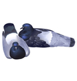 Pair of wild pigeons resting vector image vector image