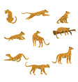 set leopards in various poses cute trend style vector image vector image
