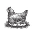 chicken and eggs sketch vector image vector image