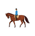 male jockey riding horse isolated against white vector image