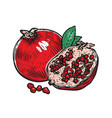 pomegranate fruit whole half fruit and vector image