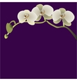 a branch with three flowers vector image