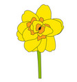 abstract hand drawn narcissus flower vector image