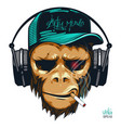 music fan hipster monkey in headphone vector image