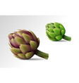 two fresh globe artichoke on transparent vector image