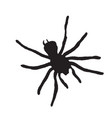 spider silhouette on a white background vector image vector image