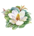 Watercolor Summer blooming white magnolia flower vector image