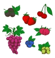 Wild forest and garden fruits colored sketches vector image vector image