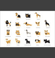 collection different dogs breeds characters and vector image