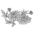 decorative chrysanthemum vector image vector image