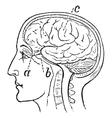 Optic Nerve vintage engraved vector image vector image