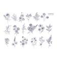 Set of beautiful floristic flowers flowering vector image