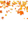 autumn background with golden maple oak and vector image vector image