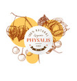 round emblem with hand drawn physalis vector image vector image