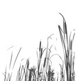 silhouette reed bush vector image vector image