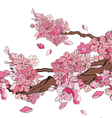 Sakura 1 vector image vector image