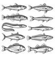 sea animals ocean fish species outline icons set vector image