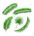 collection palm tree leaves vector image vector image